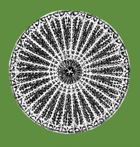 Diatom, fossilized algae