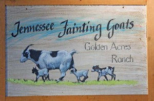 Tennessee Fainting Goats