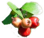 Mayhaw Berries