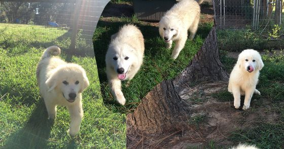 India's puppies