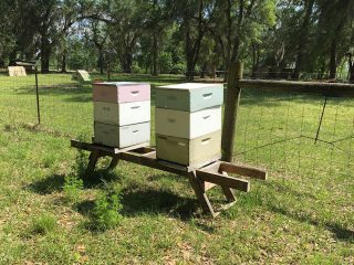 Full Moon Apiary bee hives at Golden Acres Ranch