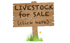 Livestock for Sale at Golden Acres Ranch