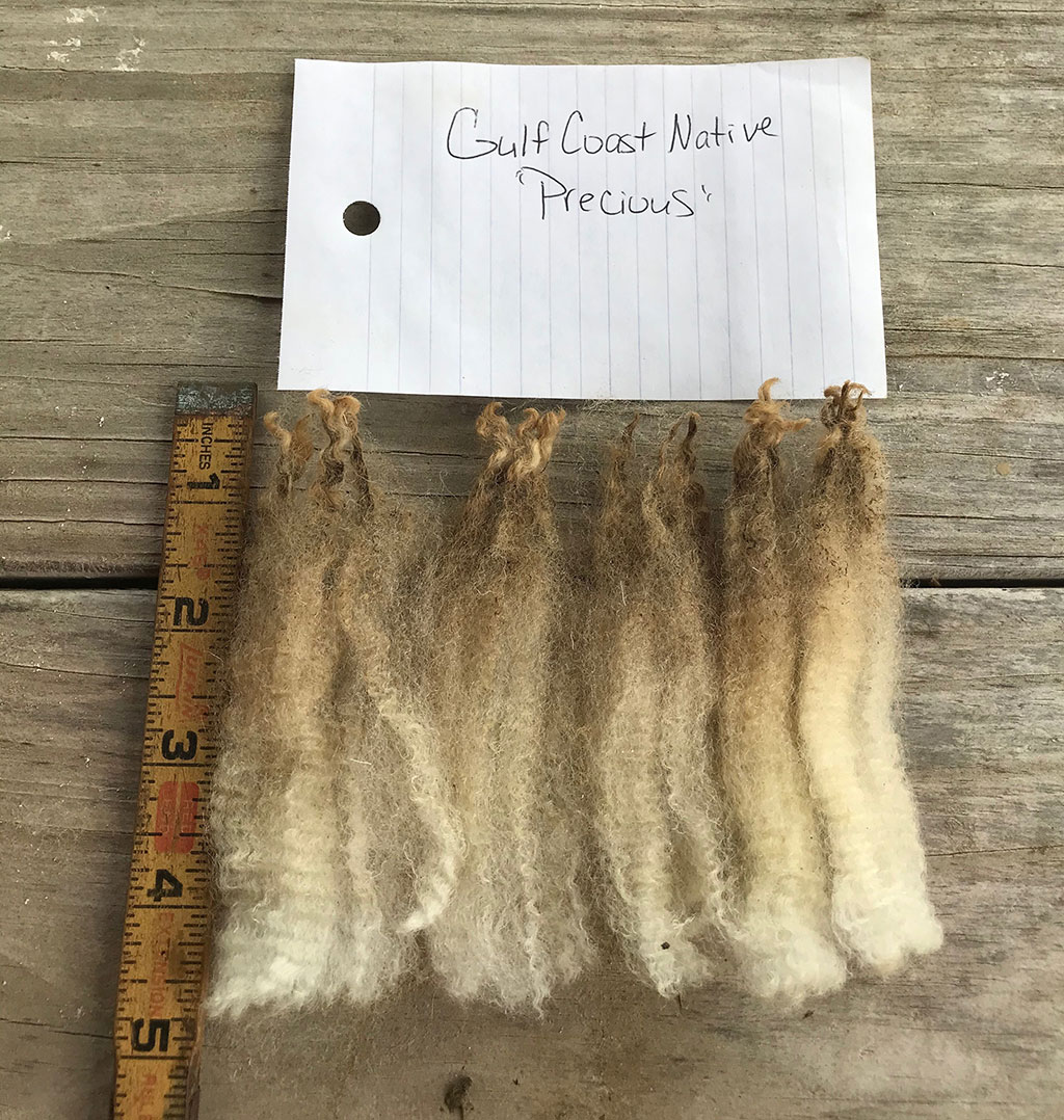 Raw wool length