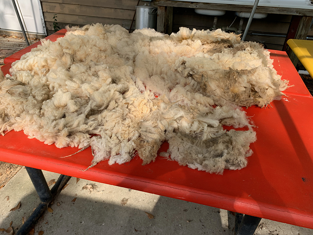 Raw wool from our sheep